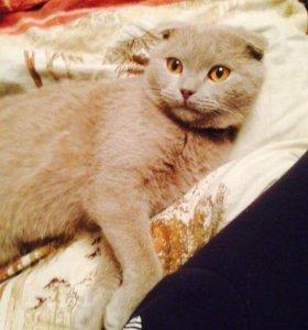 Веслаухий кот