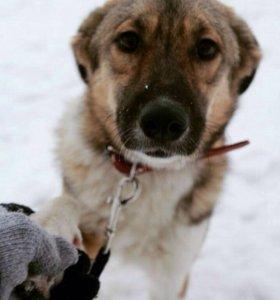 Собака в добрые руки даром
