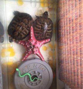 Две  черепахи мальчик и девочка с аквариумом