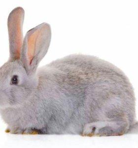 Парное мясо кроликов