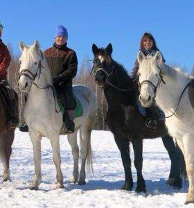 Лошадь в аренду и разовые занятия