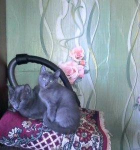 Отдам красивых котят.К туалету приучены.Девочки от