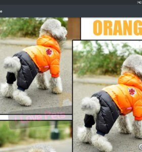 Одежда для маленькой собаки