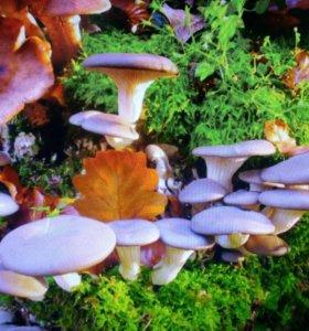 Субстрат для выращивания грибов вешенка