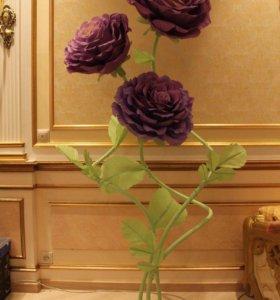Цветы, Розы, большие