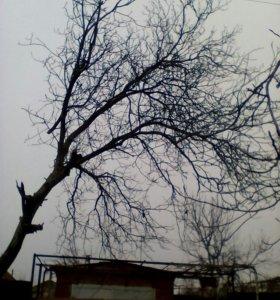 Спил деревьев , карчёвка пней , зачистка участков