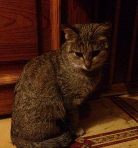 Кошечка, 2 года, стерилизована