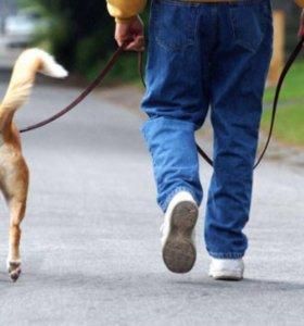 Могу выгулять собак