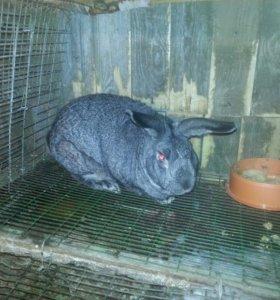 Кролики(мясо кроликов)
