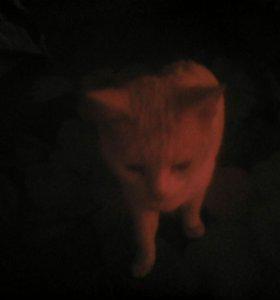 Кошка/Кот