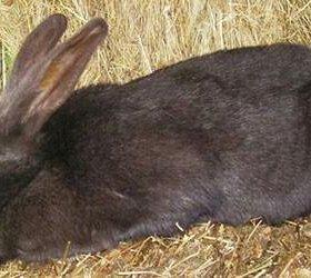 Кролики от 350 руб. 4-х месячные.