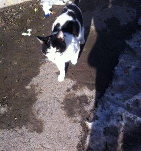 Кошечка и котики жду любящих хозяев!!!!!!!