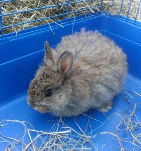 Продам декоративного крольченка
