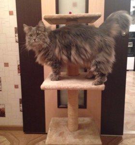 Кошачья когтеточка - домик Б/У 😻