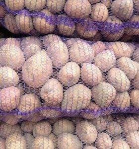 Высокие репродукции сортов картофеля (семенной)