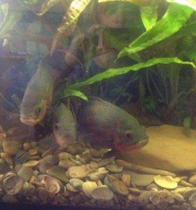 Действующий аквариум с рыбками