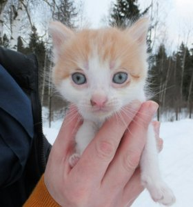 Котята 1мес. в добрые руки
