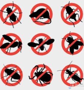 Уничтожение клопов, тараканов, грызунов и др