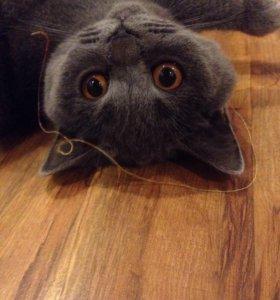 ждем котика на вязки
