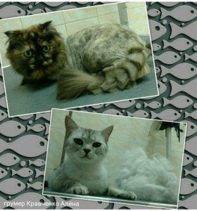 Экспресс линька и стрижка кошек