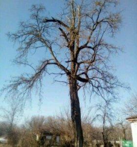 Спил деревьев,продаю дрова