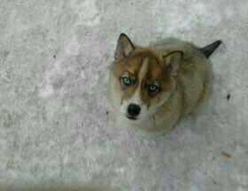 Продам щенка 2 месяца.