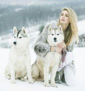 Фотосессии с собачками хаски