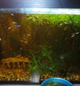 Рыбки и водоросли