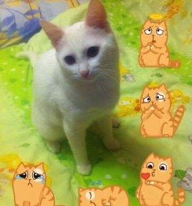Кот, лоток, шампунь, миски 3 шт