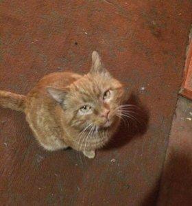 Очаровательный взрослый кот
