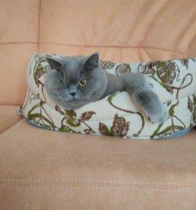 Передержка кошки