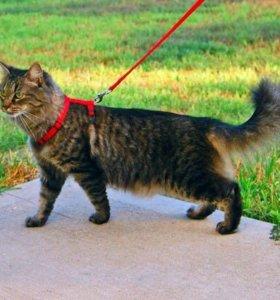 Поводок и шлейка для кошки
