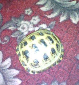 Продам черепаху и корм