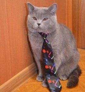 Вязка, кот