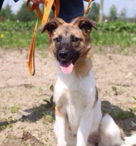 Небольшая собачка Лили ищет семью, в добрые руки