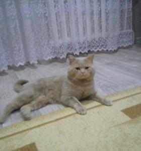 Кот на вязку 89272377041