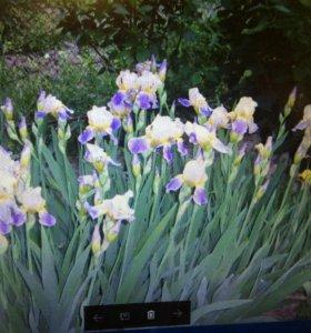 Пионы, Лилии, хризантемы, флоксы, папортник , и др