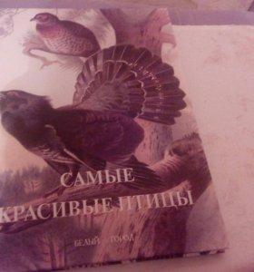 Книга самые красивые птицы. Изд. Белый город
