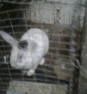 Кролики Клетки 89674220405