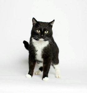 Кот Тимми