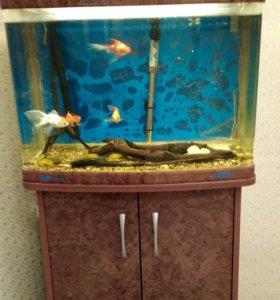 Рыбки и аква