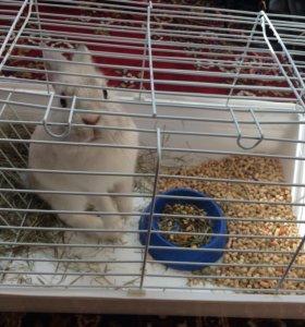 Продаётся декоративный кролик