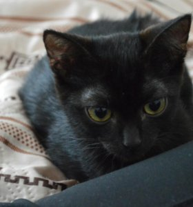 Невероятно нежный котенок с янтарными глазами