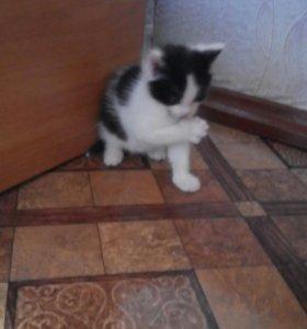 Котенок милый :3