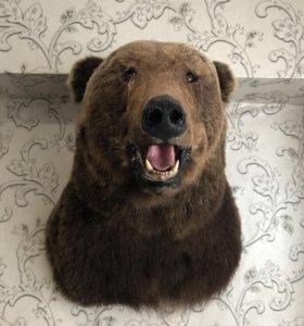 Продам. Медведь. Голова..
