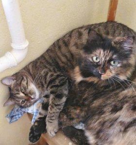 Кошки в дар
