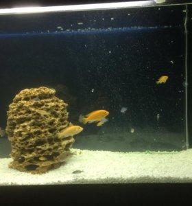 Песчаник в аквариум