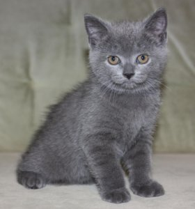 Бесплатно котенок(мальчик)