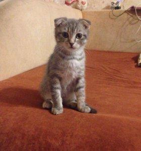 Продам котёнка