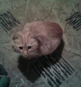 Котик 3 мес.